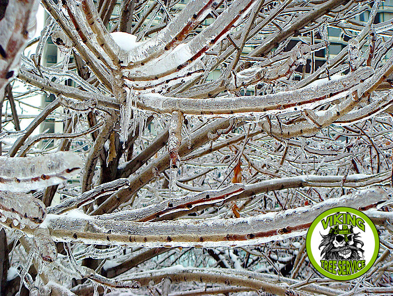 Ice Storms Tree Damage | Storm Cleanup Oshkosh WI - Viking Tree Service 4755 Old Oak Rd Oshkosh, WI 54904 ​920-203-8543